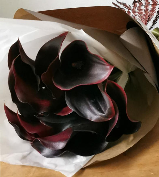 Black Calla En Masse