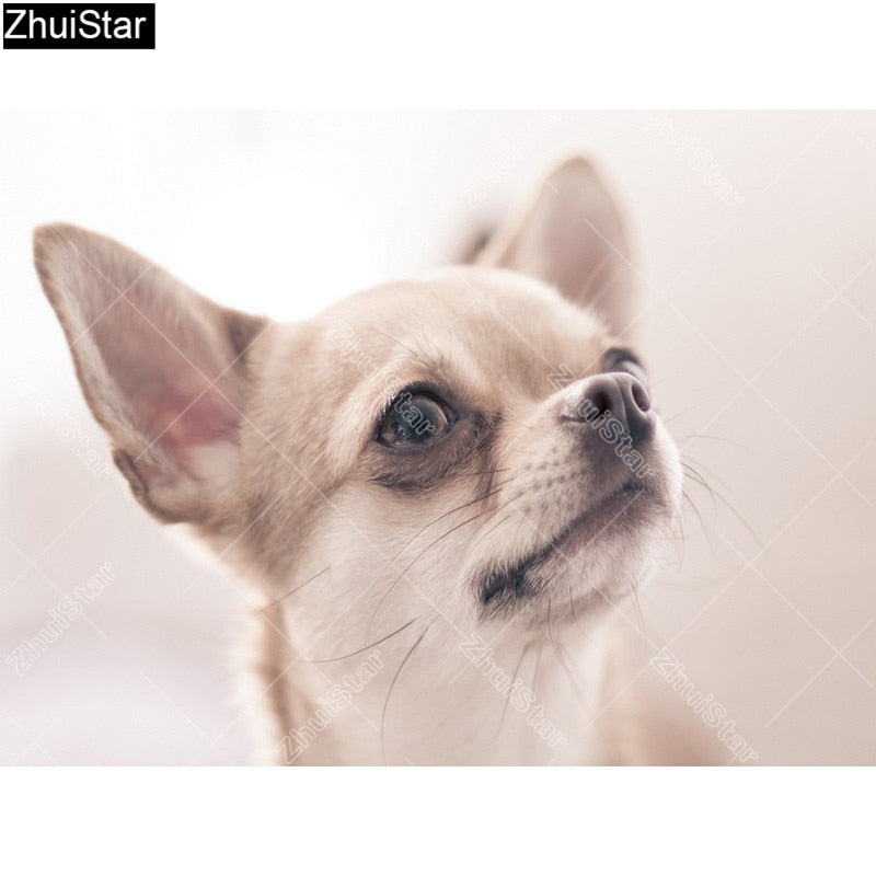 5D DIY Diamond Painting Cream Chihuahua Head Shot - craft kit