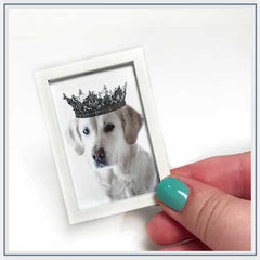 All Things Miniature Fizzy Pop Designs Royal Dog Print
