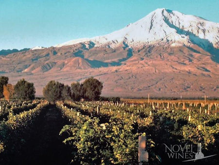 Novel Wines looks to Armenian wine to extend UK-leading range of unique wines