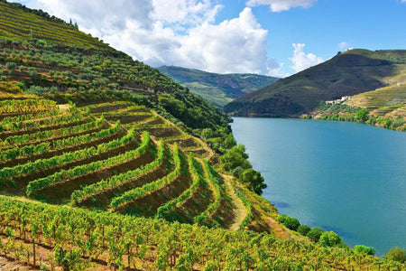 8 Reasons Why Portuguese Wine Is Amazing