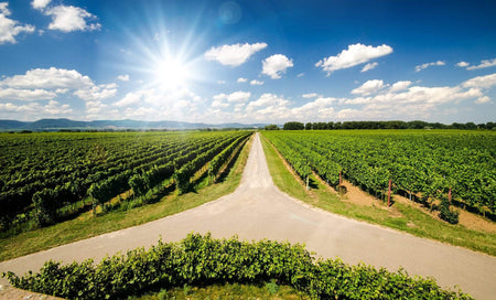 Top Wine Regions To Visit In Germany