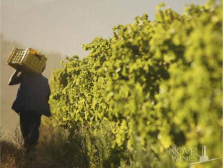 Tunisia invests in wine tours and viticulture to boost its economy