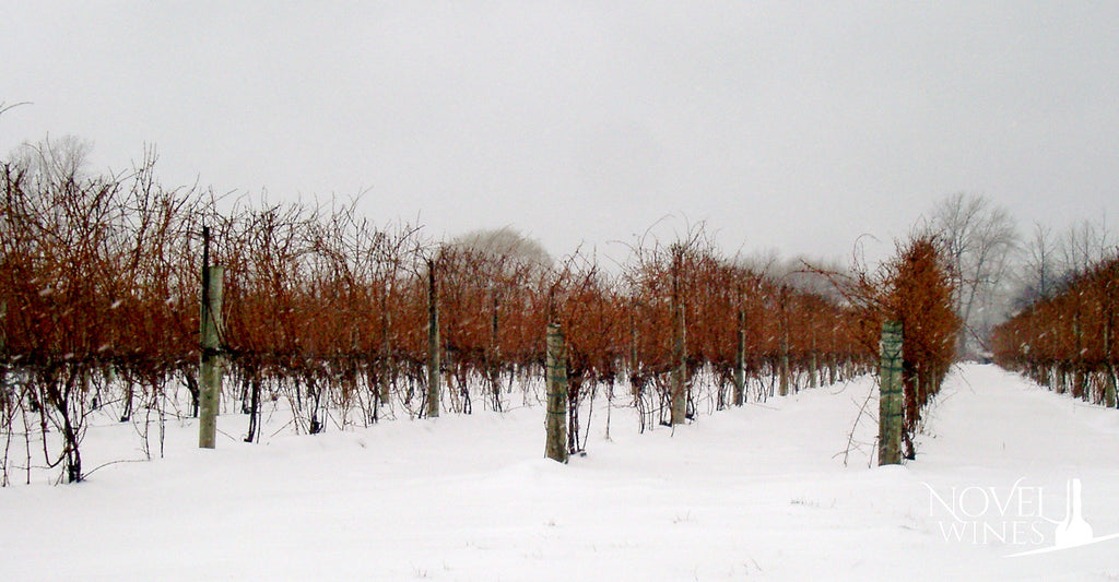 Ice Wine Vineyard from Montreal in Canada