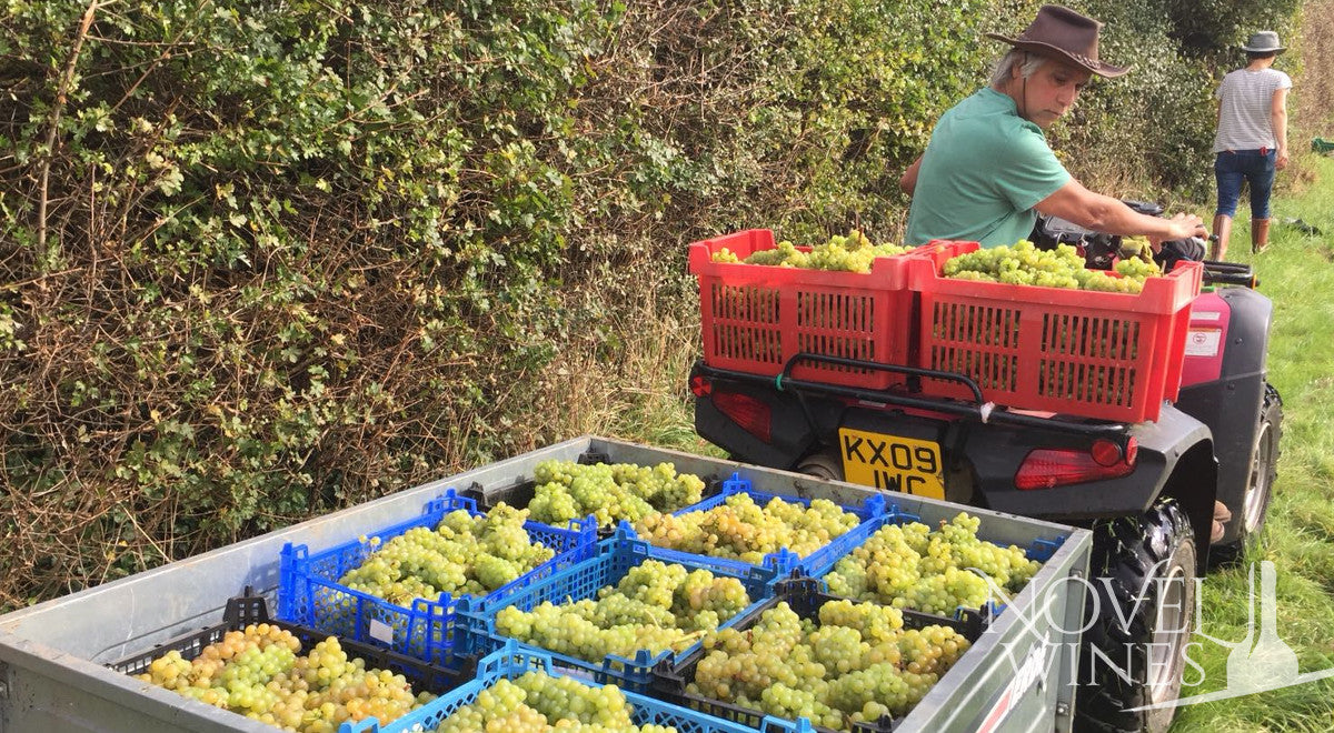 Dunleavy Vineyards grape harvest are loaded up and ready to be taken off to the winery