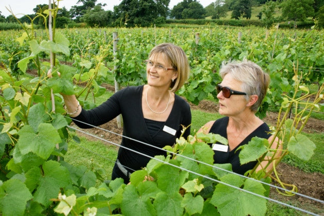 Sandy Luck talks to Elizabeth about the vineyard