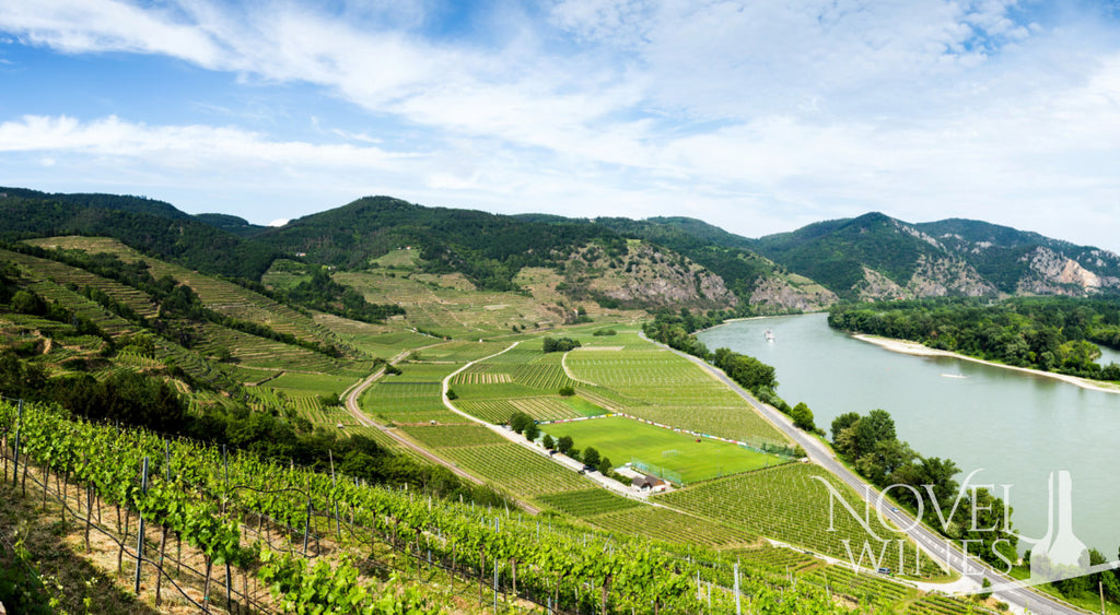 Vines along the Danube River where you will find the best value wines
