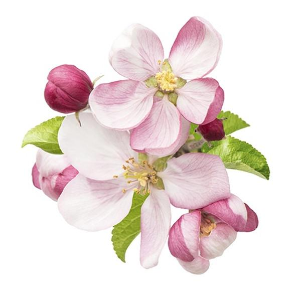 Budureasca Premium Tamaioasa Romaneasca has aromas of apple blossom flowers