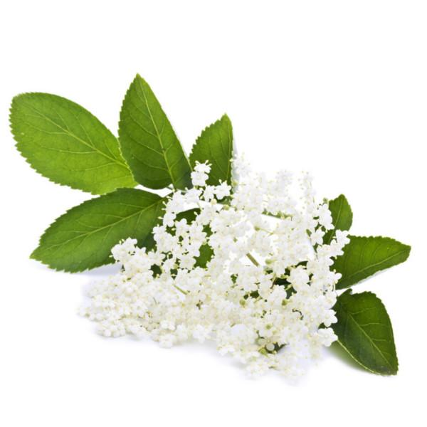 Hints of elderflower in the Budureasca Premium Tamaioasa Romaneasca