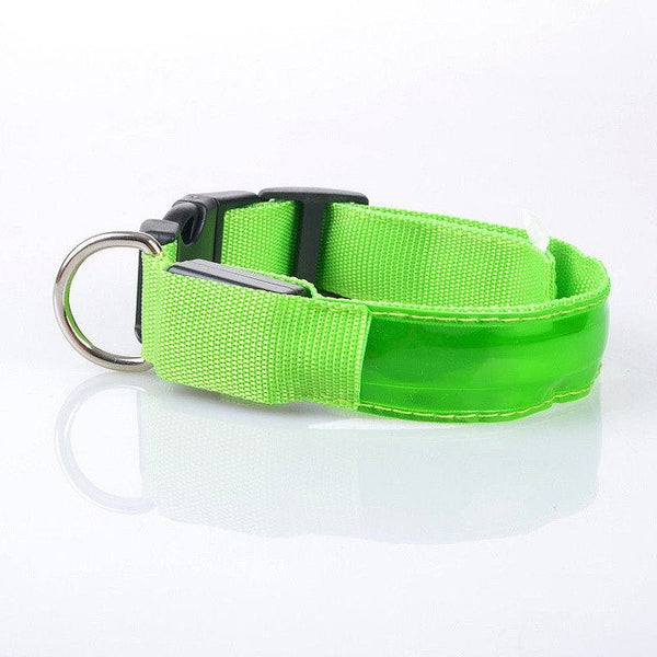 Shih Tzu Collars and Leashes