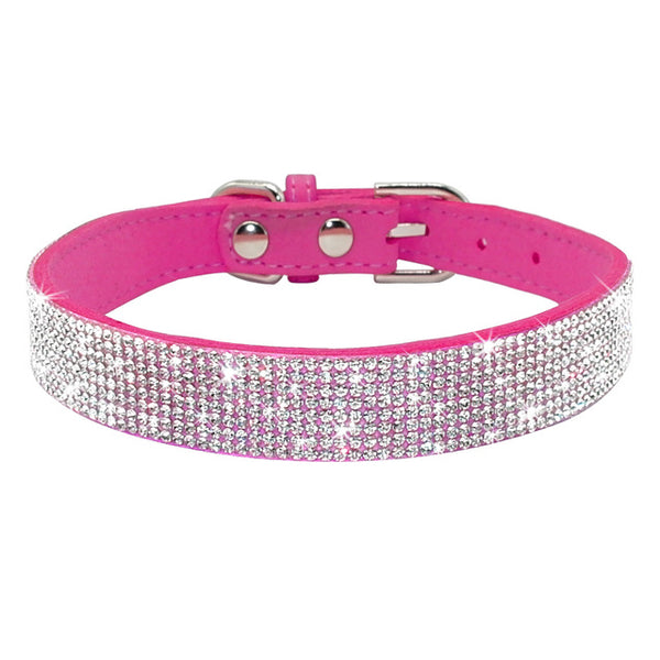 Flashy Leather Collar for the Fancy Spoiled Shih Tzu