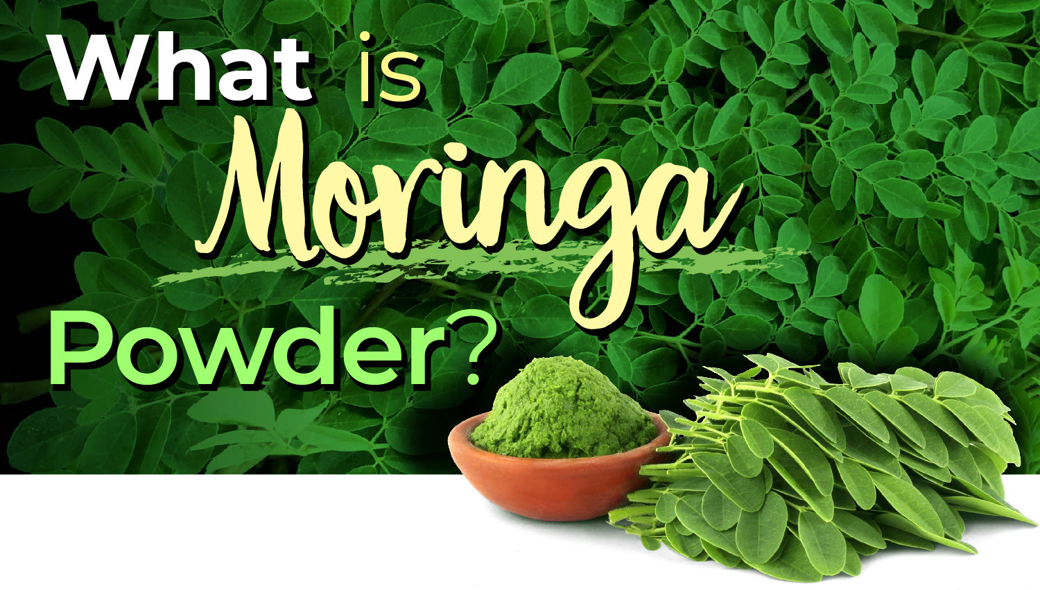 What is Moringa Powder? 3 Simple Ways to Use It | Blog