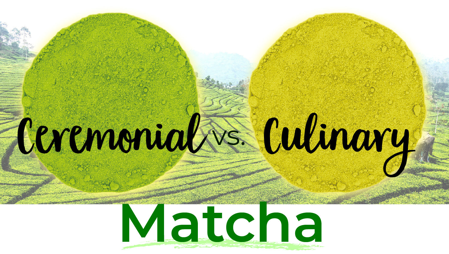 Ceremonial Matcha vs. Culinary Matcha | What's The Difference? | Blog | Alovitox Organic Superfoods