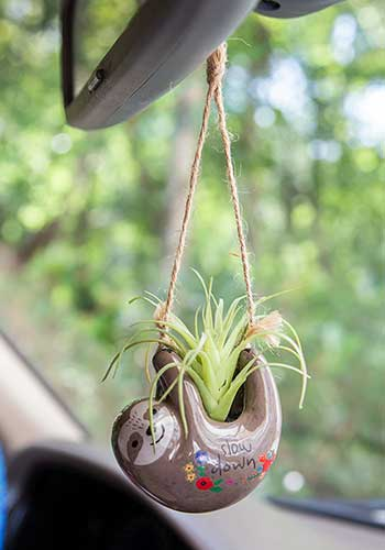 "Hanging Succulent in ""Grey Sloth"""