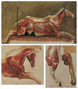ALBERT LUGARDON - Three Studies of Skinned Horses