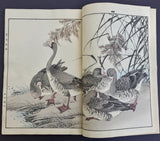 Imao Keinen Album of Birds and Flowers (Keinen kacho gafu) Autumn