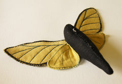 the underside of the moth with all wings attached