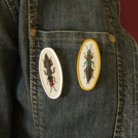Hand Embroidered Rove Beetle Brooch Entomology Jewelry