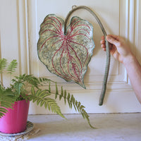 Caladium Leaf Wall Hanging, Botanical Decor