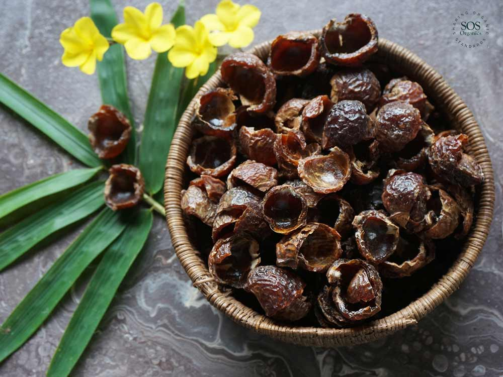 Soap nuts or Wonder nuts?
