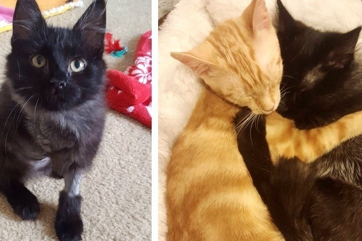 3-legged Kitten Finds Courage from Ginger Kitten with Frozen Elbow