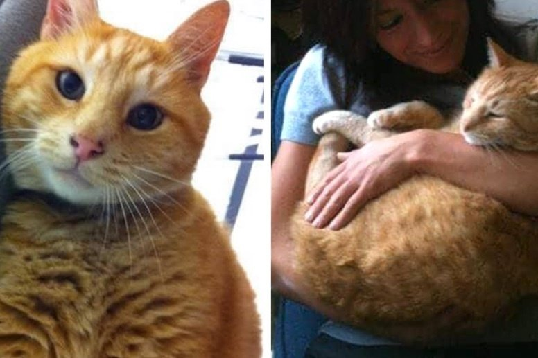 Cat Went to School for Almost 20 Years, Offering Students Comfort, Left Incredible Legacy