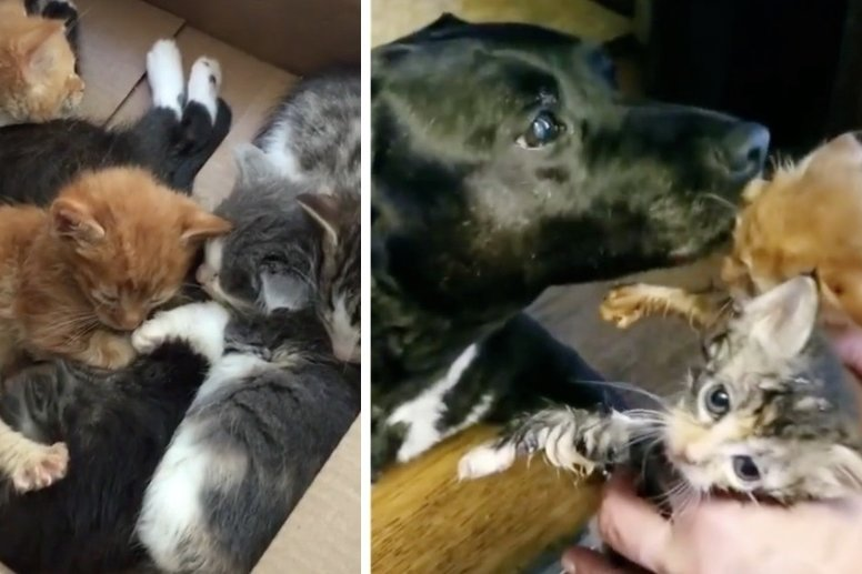 11 Kittens Who Came to Shelter in a Box, Find Motherly Love in Rescued Dog
