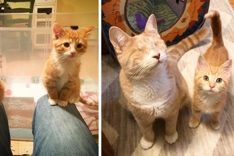 2 Shy Kitten Sisters Learn to Trust and Love from Blind Ginger Cat