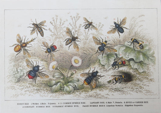 SINGLE CARD - Twelve different species of bees swarming a flowery meadow