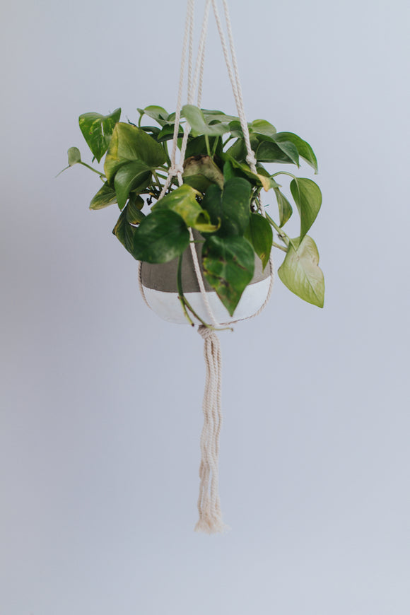 Suspended Plant Holders | ROOLEE