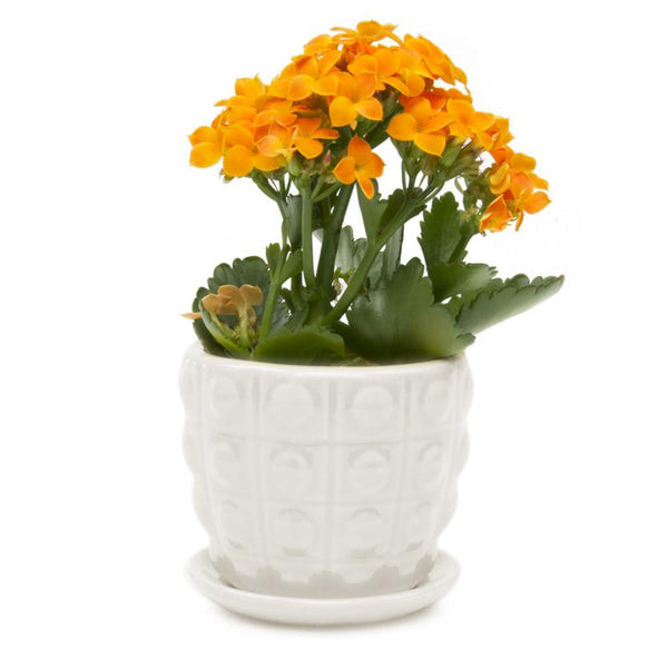 Chive - Convex Planter - White