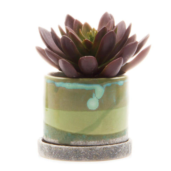 Chive - Minute Pot & Saucer - Green Cement - Big