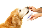Dog Probiotics: What Are They and Should Your Dog Be Taking Them?