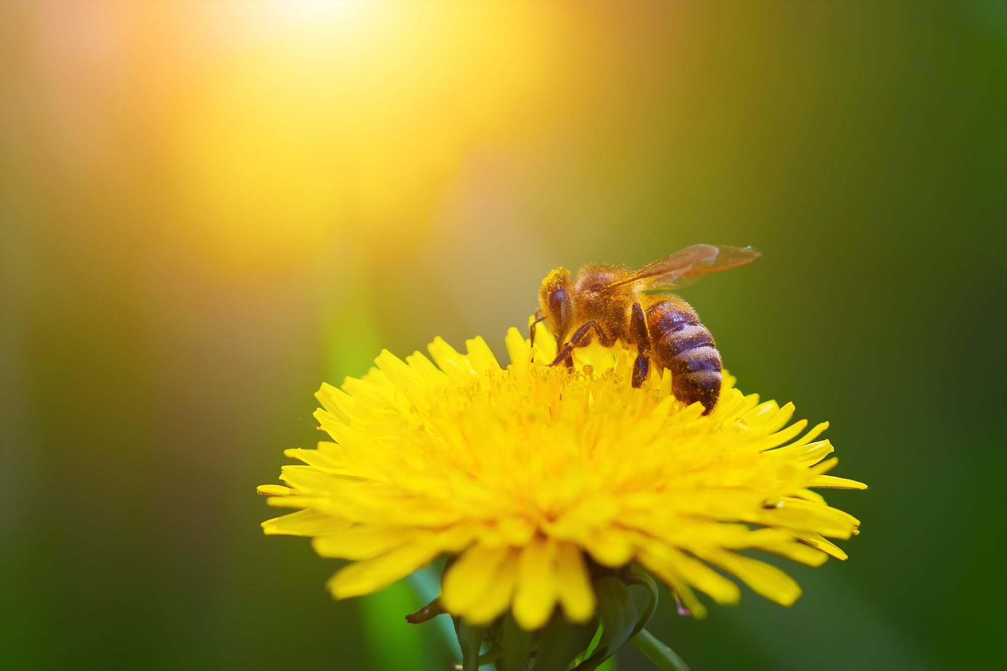 Royal Jelly: The Health Boosting Side of Bee Pollen