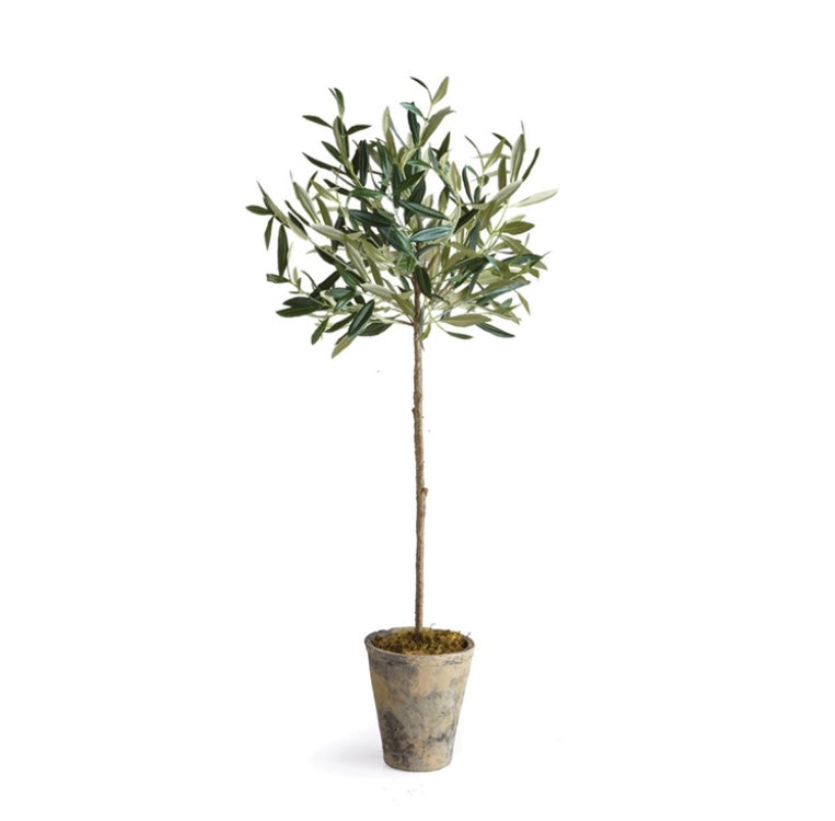 Olive Tree Potted - dolly mama boutique