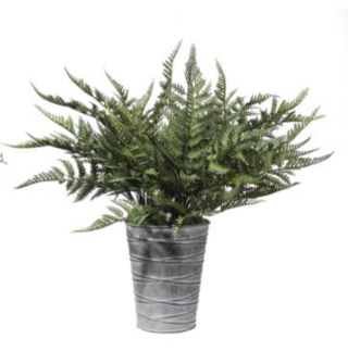 QUIMBY POTTED FERNS - dolly mama boutique