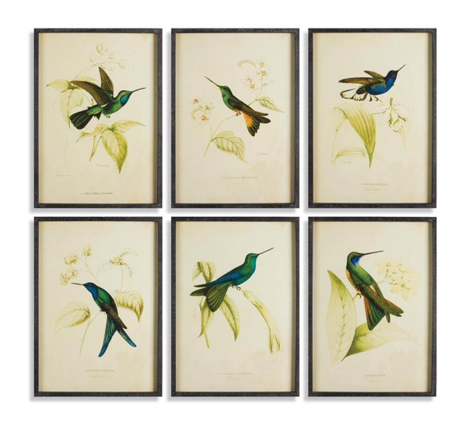 HUMMINGBIRD PRINTS - dolly mama boutique