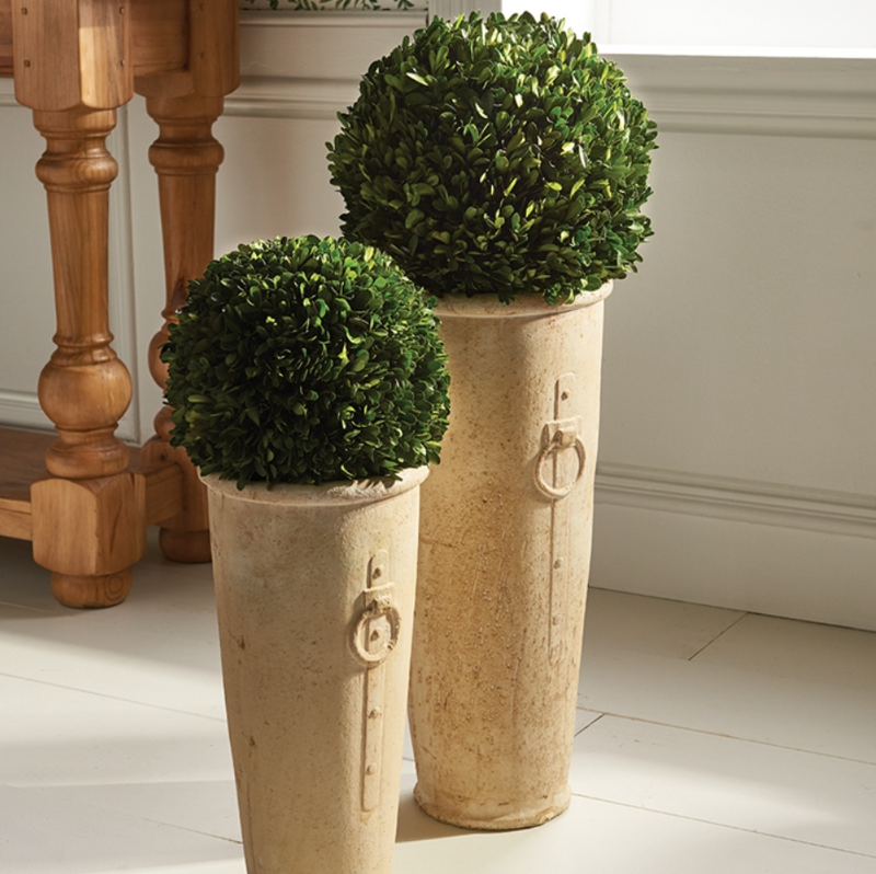 "BOXWOOD 12"" BALL IN TALL POT - dolly mama boutique"
