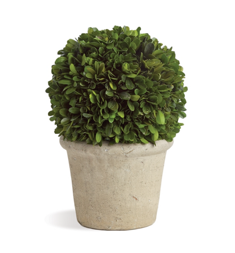 "BOXWOOD 8"" BALL IN POT - dolly mama boutique"