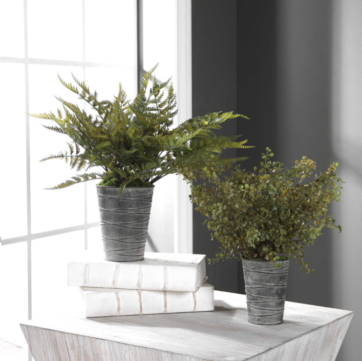 QUIMBY POTTED FERNS, Set of 2