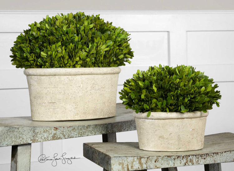 PRESERVED BOXWOOD OVAL DOMES, Set of 2