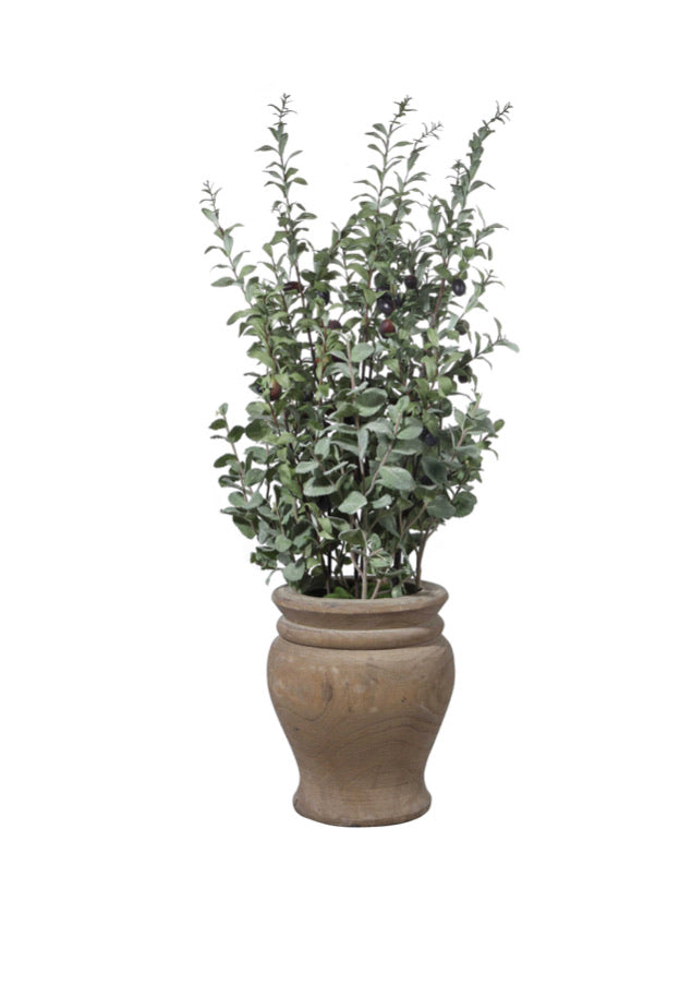 TASSOS POTTED OLIVE - dolly mama boutique