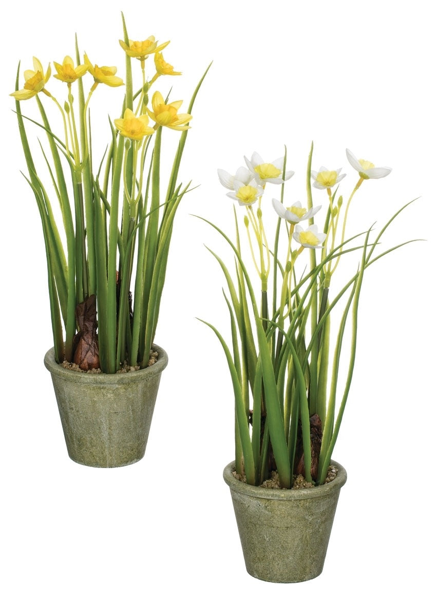 Sullivan's Daffodils - dolly mama boutique