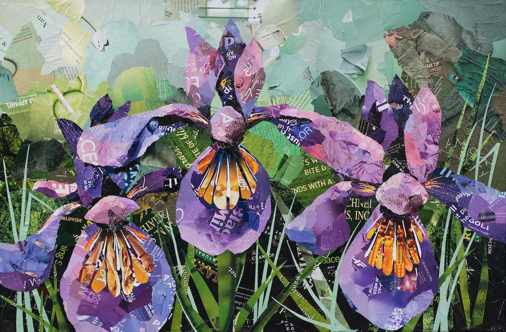 Irises in Bloom Collage