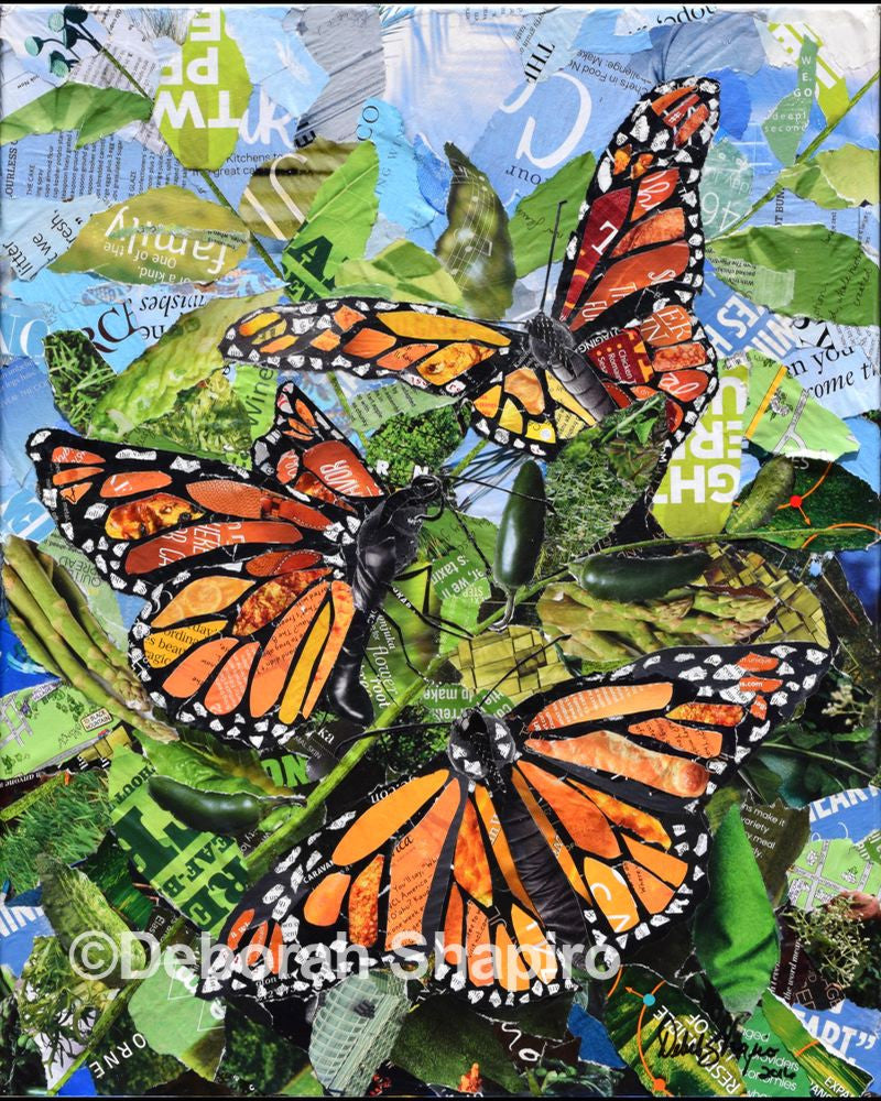 Monarch Butterfly Prints For Sale Deborah Shapiro Art