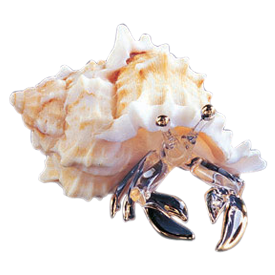 Hermit Crab ~ 22kt Gold accents ~ S2 250