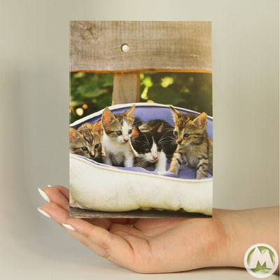 Bed Full of Kittens Funny Greeting Card MemoryTag Greeting Cards-Greeting Card-MemoryTag Greeting Cards