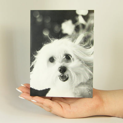Little White Dog-Greeting Card-MemoryTag Greeting Cards