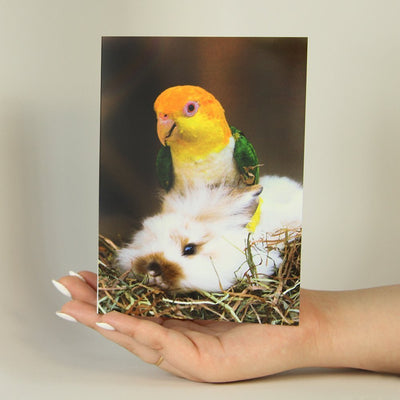 Parrot Hat-Greeting Card-MemoryTag Greeting Cards