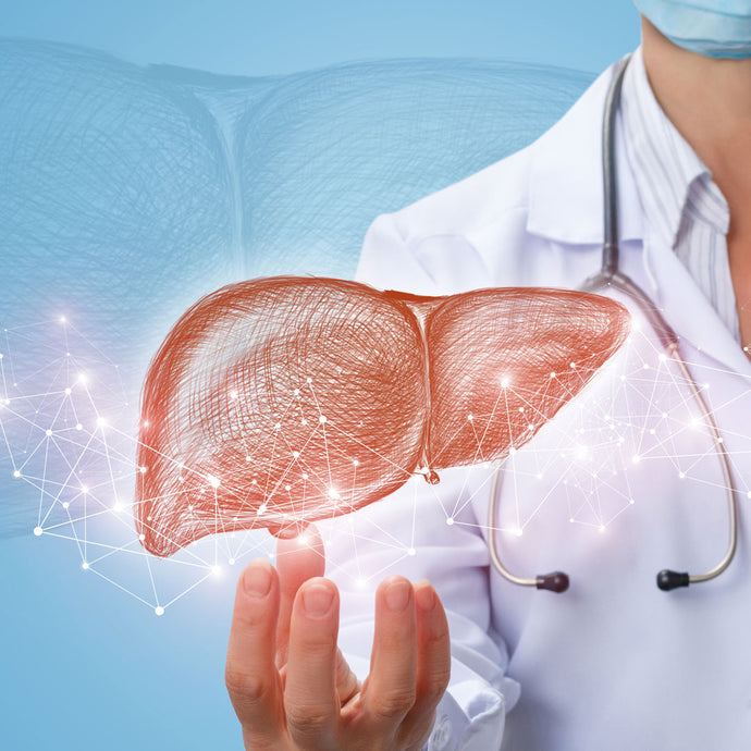 Liver Health 101: Introducing TUDCA